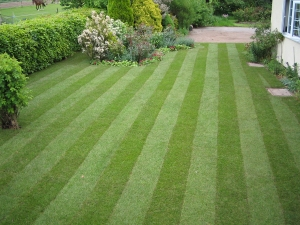 Three Common Lawn Problems How DJ Turfcare Can Help